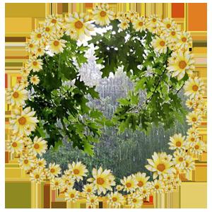 Народные приметы на 17 июня день памяти Святого Митрофана