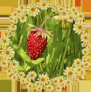 Народные приметы на 23 июня день Тимофея, праздник Агафена Купальница