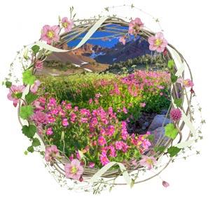 Народные приметы на 25 июля день памяти Прокла-Плакальщица