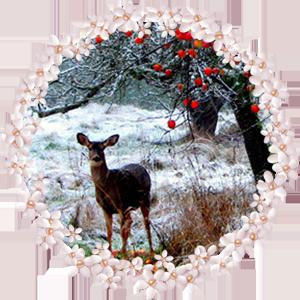 Народные приметы на 22 декабря день памяти Анны Зимней