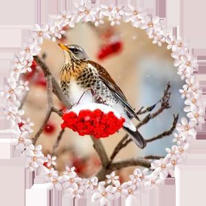 Народные приметы на 8 декабря Климентьев день
