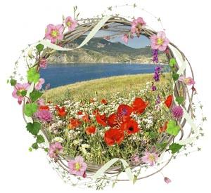 Народные приметы на 11 июня день памяти Феодосьеи Гречушницы (Колосницы)