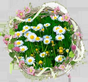 Народные приметы на 20 июня день Федота Анкирского