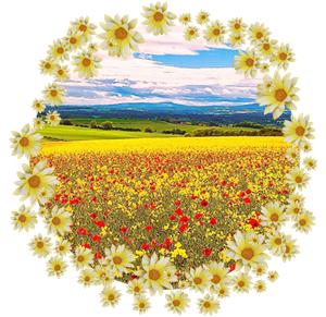 Народные приметы на 4 июля Ульянов день (Иулиана Тарсийского)