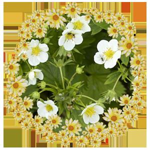 Народные приметы на 4 июня Соловьиный день, день памяти Василиски