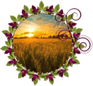 Народные приметы на 10 августа день памяти Пармена и Прохора