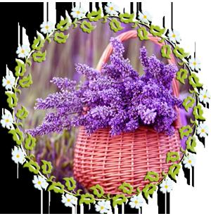Народные приметы на 24 июля день памяти Ольги, Ефимьи-Стожарницы