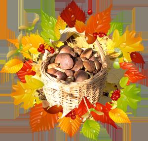 Народные приметы на 2 октября день памяти Трофима и Зосимы