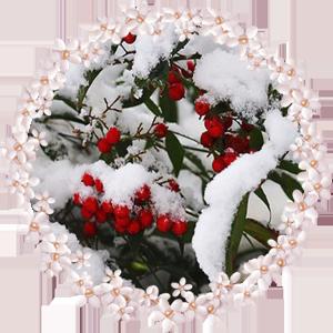 Народные приметы на 3 декабря день памяти Прокла