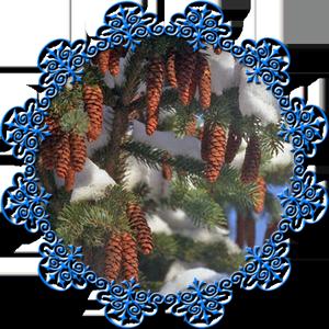 Народные приметы на 7 декабря день Катерины Санницы